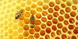 Το μέλι, οι ποικιλίες, η τιμή και οι προοπτικές